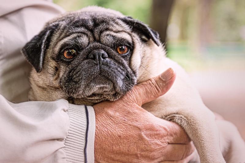 Adottare un cane fa bene agli anziani, e alla sanità pubblica