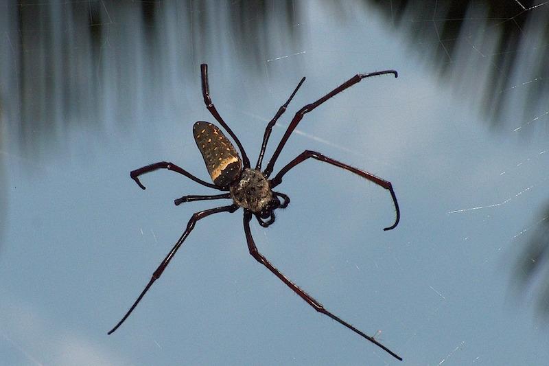 Malattie e vacanze: gli italiani temono gli insetti dei Paesi tropicali